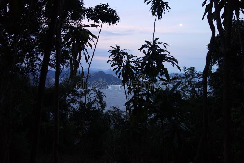 Noc w dżungli zdjęcie royalty free
