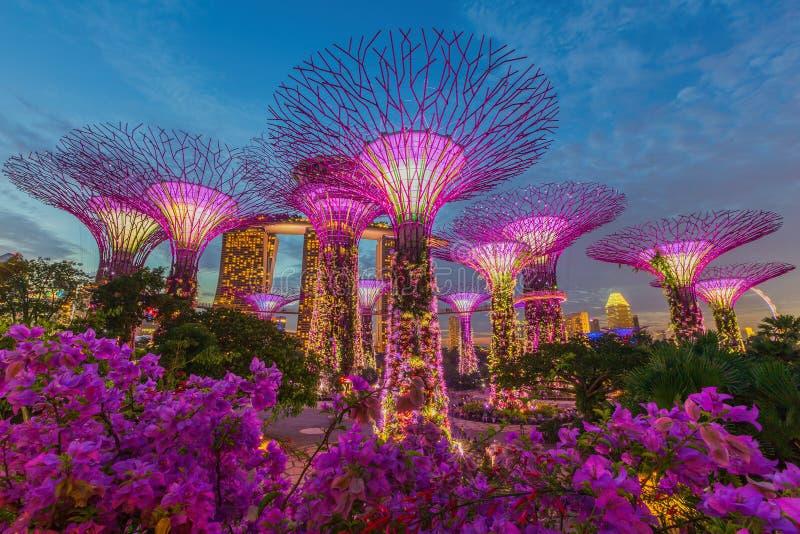 Noc widok Supertree gaj przy ogródami zatoką obrazy royalty free