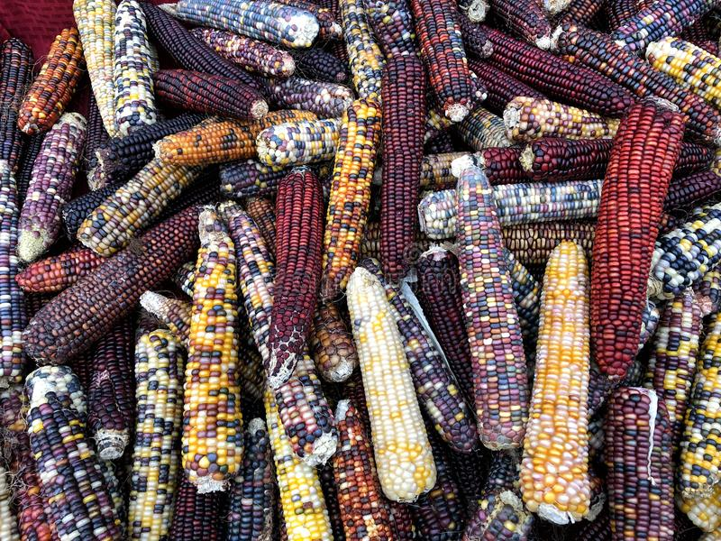 Noccioli di cereale variopinti immagini stock