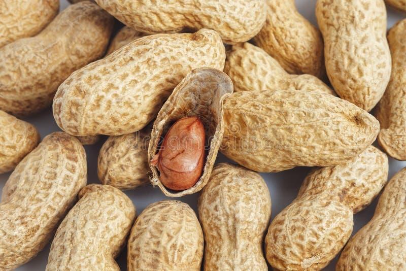 Nocciolo rosso dell'arachide nelle coperture fotografie stock libere da diritti