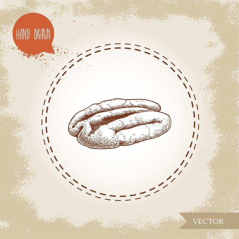 Noce americana Metà disegnata a mano di stile di schizzo del centro del seme della noce americana Illustrazione organica di vetto royalty illustrazione gratis