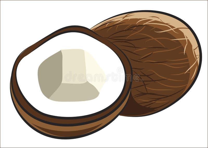 Noce di cocco illustrazione vettoriale