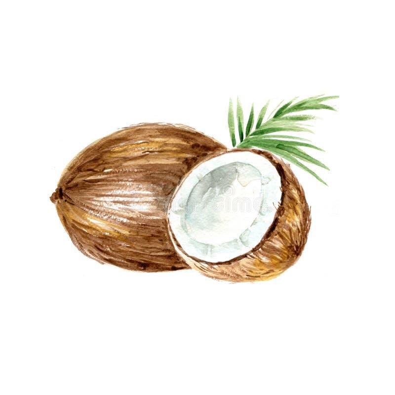Noce di cocco royalty illustrazione gratis