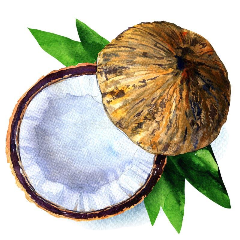 Noce di cocco con la metà e foglie isolate, illustrazione dell'acquerello su bianco illustrazione di stock