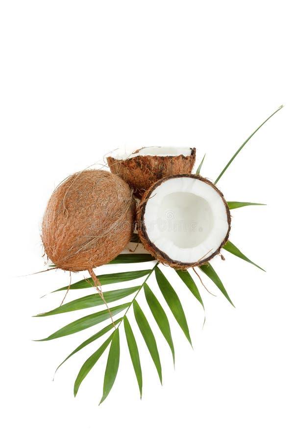 Noce di cocco con le foglie fotografie stock