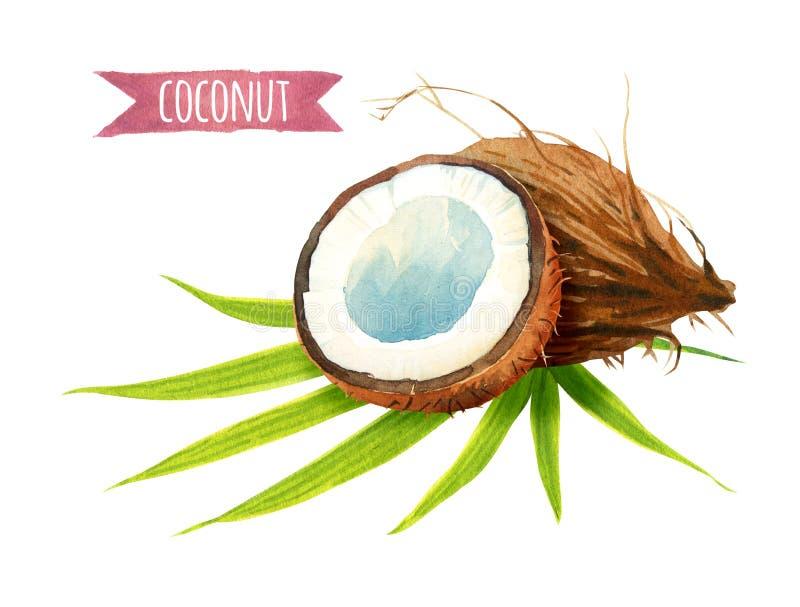 Noce di cocco con le foglie, illustrazione dell'acquerello con il percorso di ritaglio illustrazione vettoriale