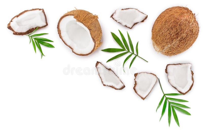 Noce di cocco con le foglie isolate su fondo bianco con lo spazio della copia per il vostro testo Vista superiore Disposizione pi illustrazione di stock