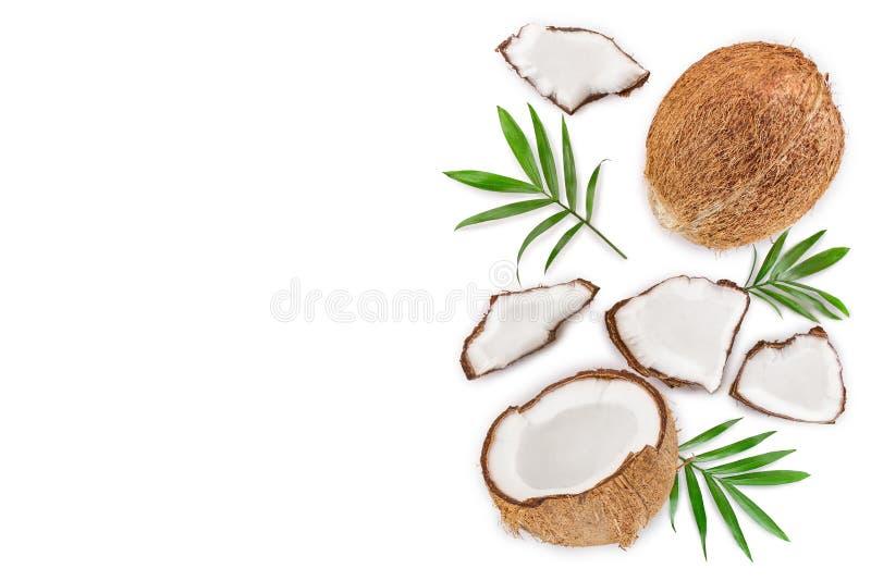 Noce di cocco con le foglie isolate su fondo bianco con lo spazio della copia per il vostro testo Vista superiore Disposizione pi illustrazione vettoriale