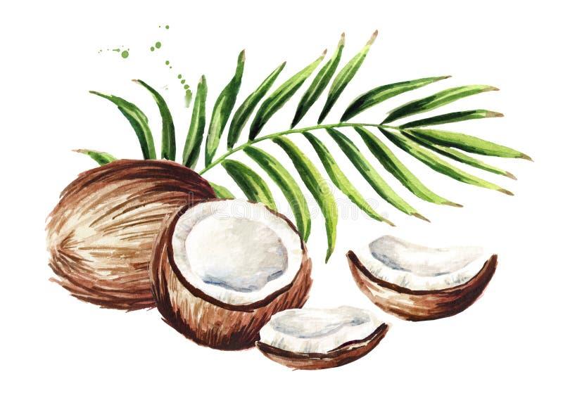 Noce di cocco con le foglie verdi Illustrazione disegnata a mano dell'acquerello isolata su fondo bianco illustrazione vettoriale