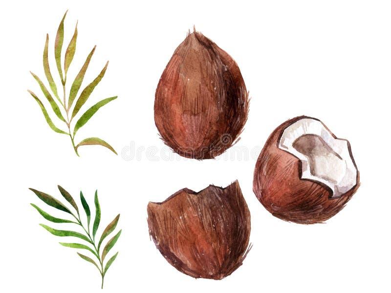 Noce di cocco dell'acquerello su fondo bianco illustrazione di stock