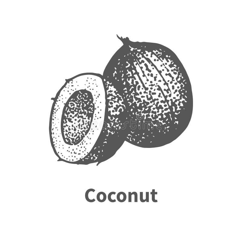 Noce di cocco disegnata a mano di schizzo di scarabocchio royalty illustrazione gratis