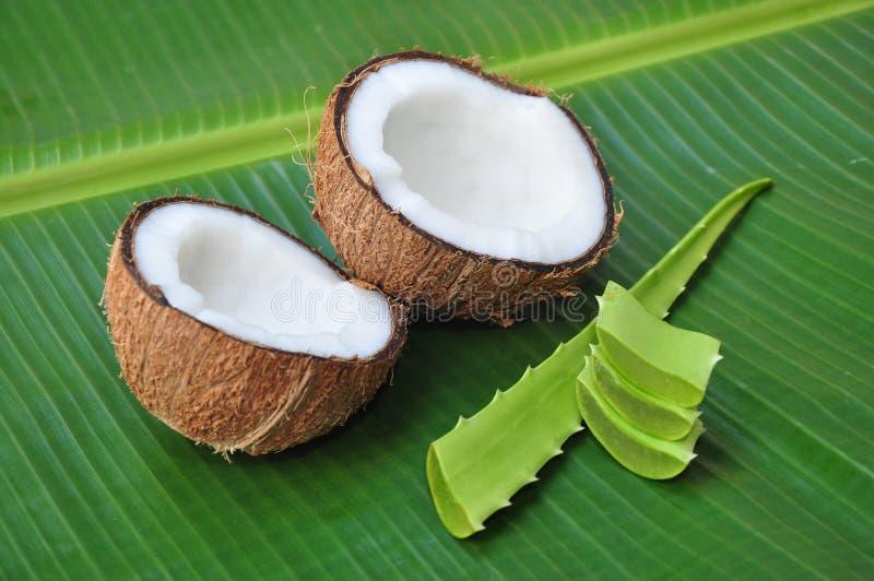 Noce di cocco ed aloe vera fotografie stock