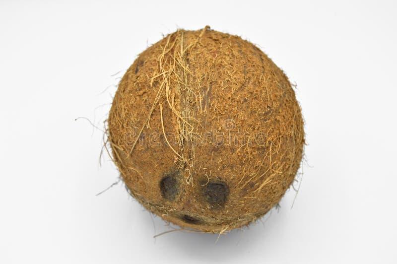 Noce di cocco esotica della frutta con superficie marrone immagini stock