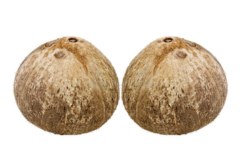 Noce di cocco fresca immagini stock