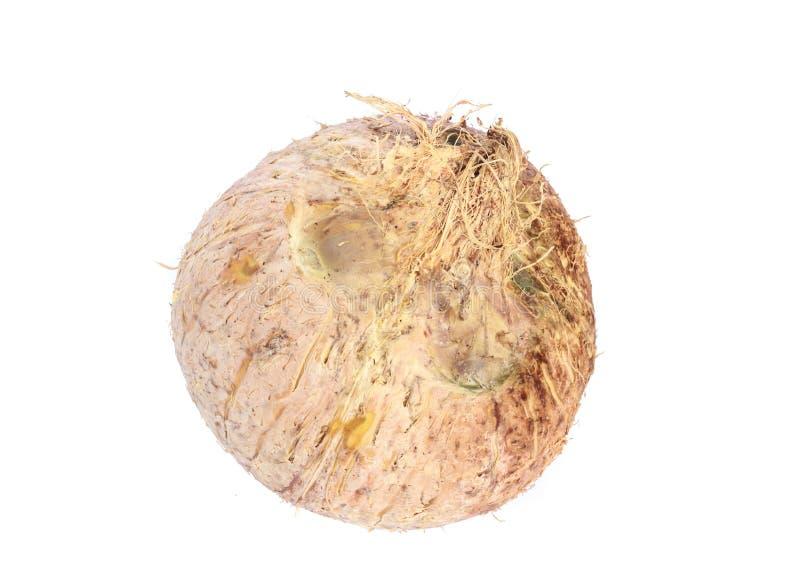 Download Noce di cocco isolata immagine stock. Immagine di alimento - 55362005