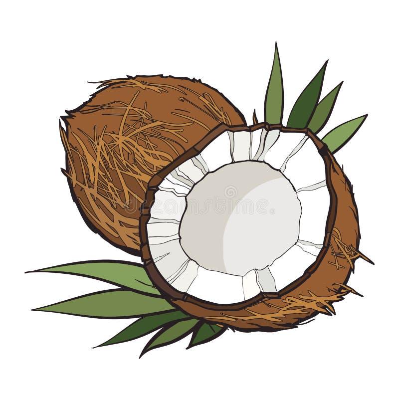 Noce di cocco isolata su fondo bianco royalty illustrazione gratis