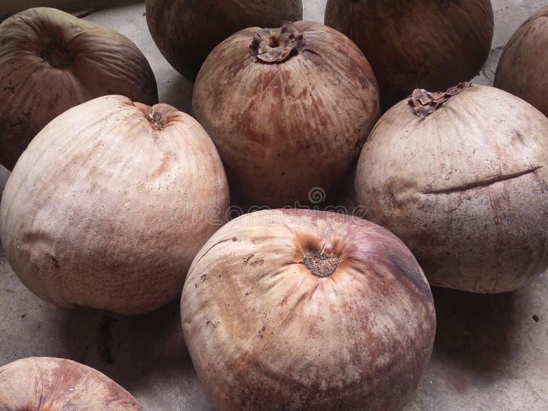 Noce di cocco matura immagine stock
