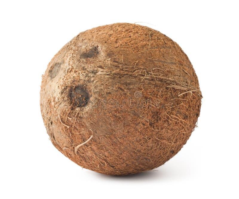 Noce di cocco matura fresca fotografia stock libera da diritti