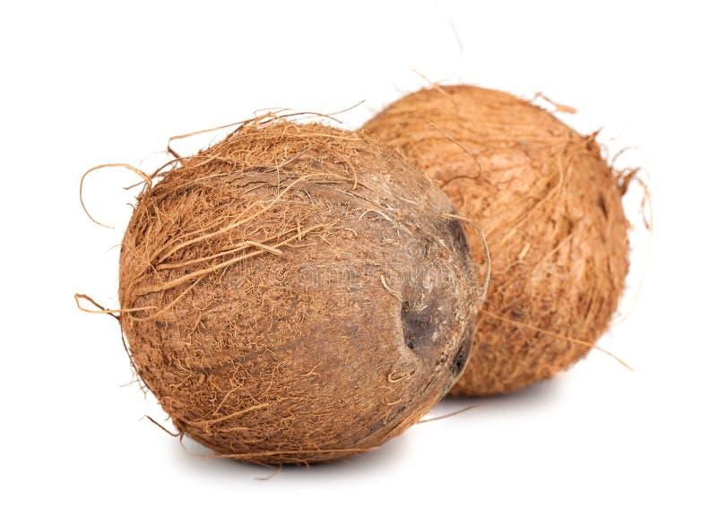 Noce di cocco matura marrone due immagine stock libera da diritti