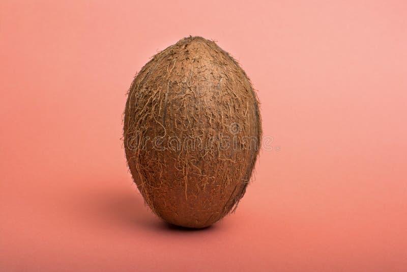 Noce di cocco su fondo colorato rosa immagine stock libera da diritti