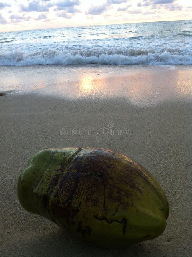 Noce di cocco sulla spiaggia immagine stock