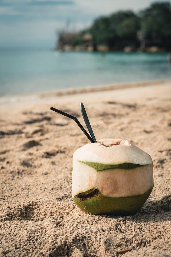 Noce di cocco sulla spiaggia fotografia stock libera da diritti