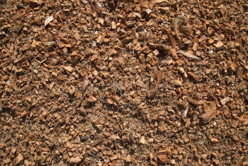 Noce di cocco, tagliata nei piccoli pezzi fotografia stock