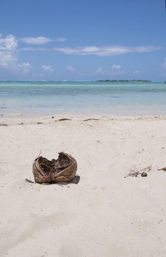 Noce di cocco in Tahiti fotografie stock libere da diritti