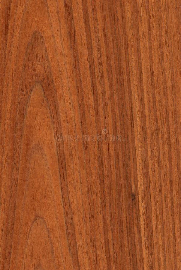 Noce (struttura di legno) fotografia stock