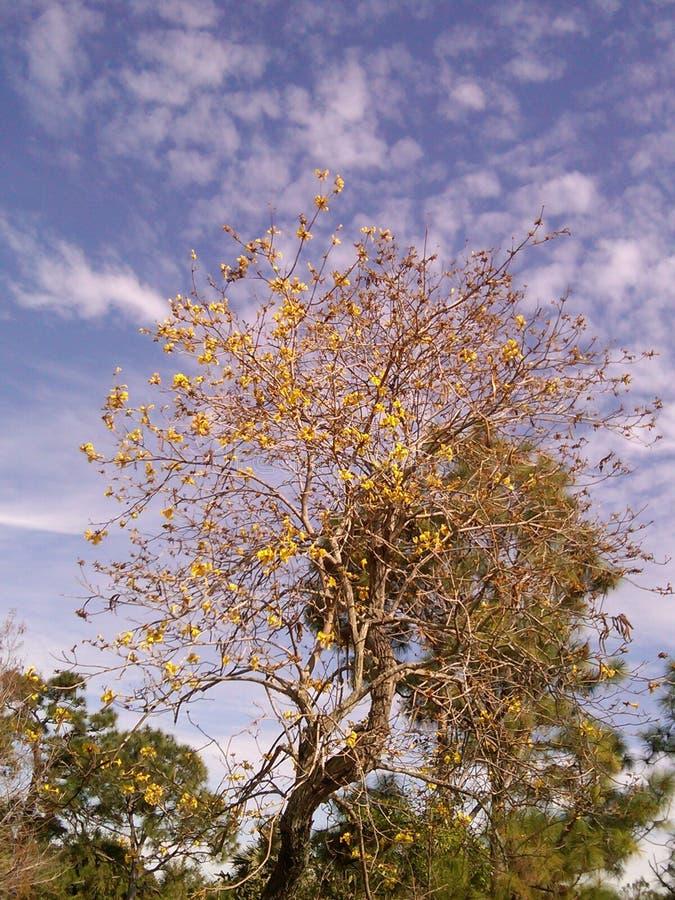 Noch Baum lizenzfreies stockfoto