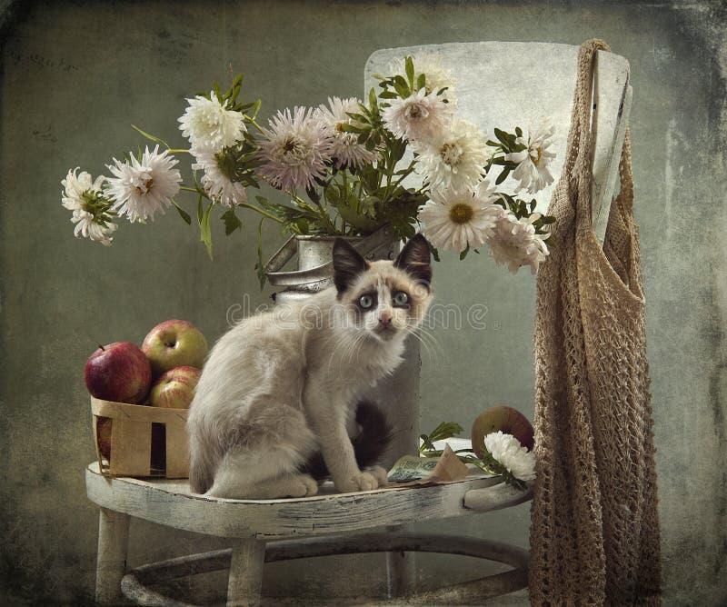 Noch Leben und Kätzchen lizenzfreies stockfoto