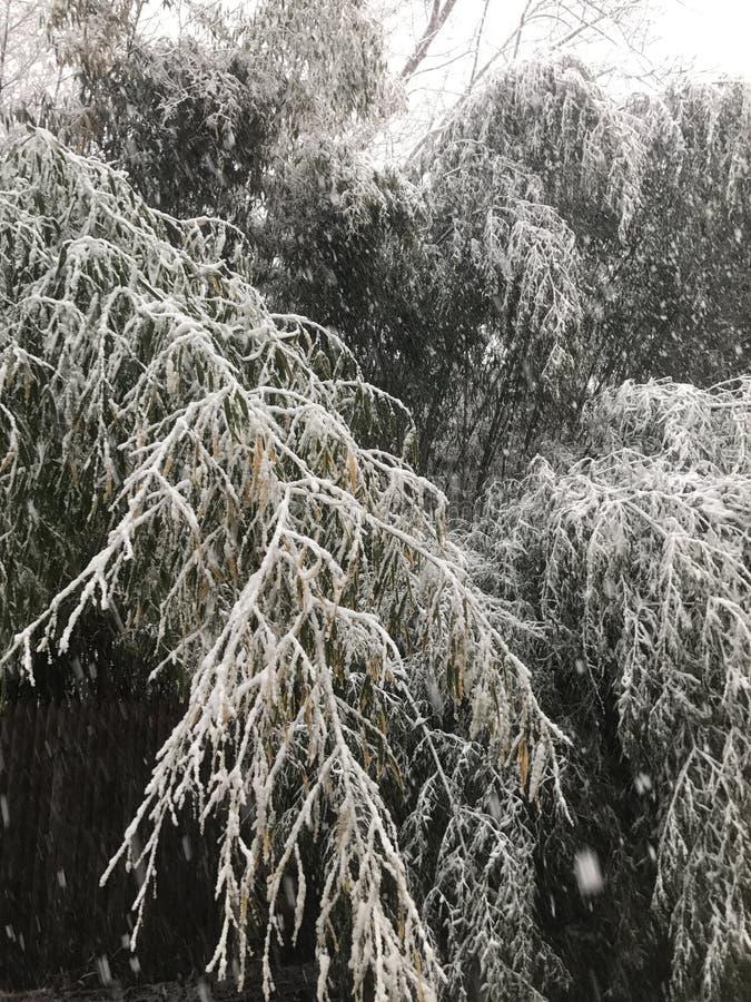 Noch ` Ostern-Blizzard des Jahrhunderts lizenzfreie stockfotos