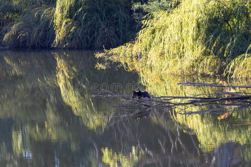 Noch Wasser-Fluss-Reflexionen lizenzfreie stockbilder