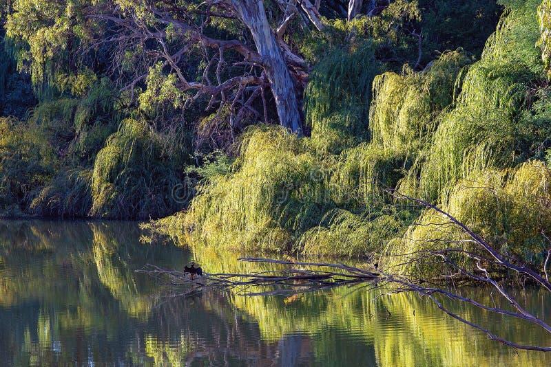 Noch Wasser-Fluss-Reflexionen stockfotos