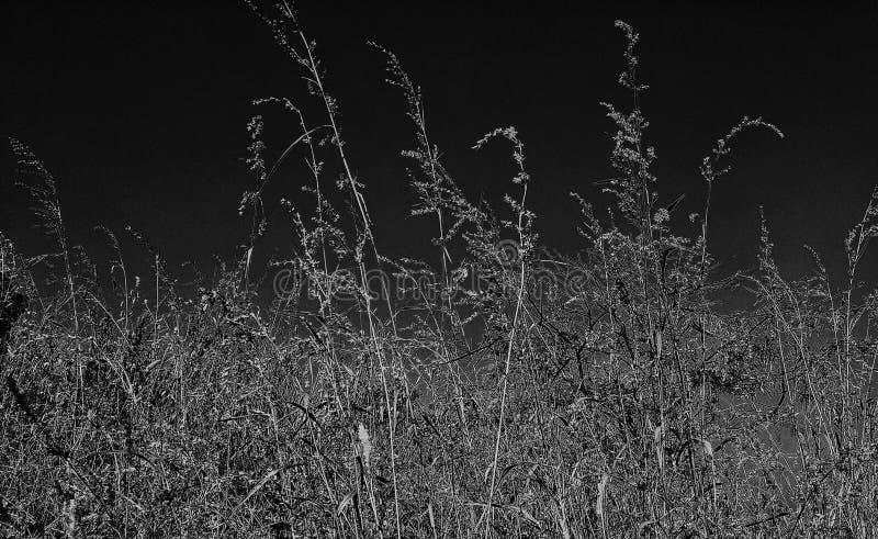 Noche con hierba fotografía de archivo