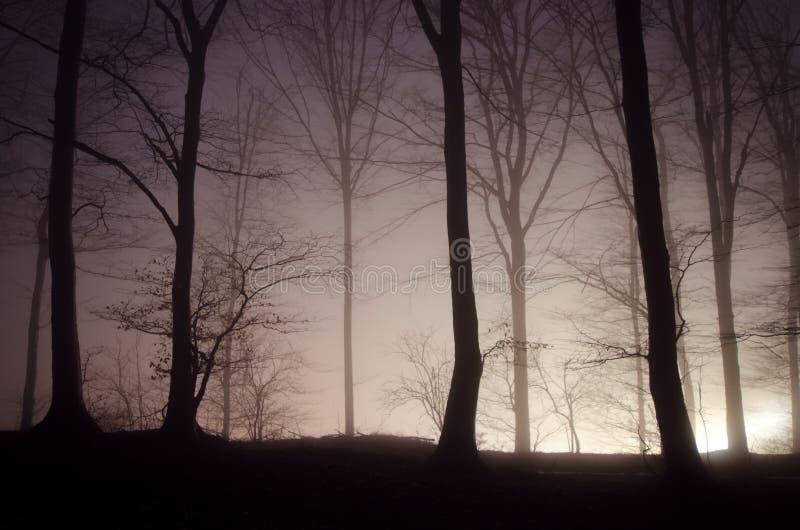 Noche de Halloween en bosque misterioso foto de archivo