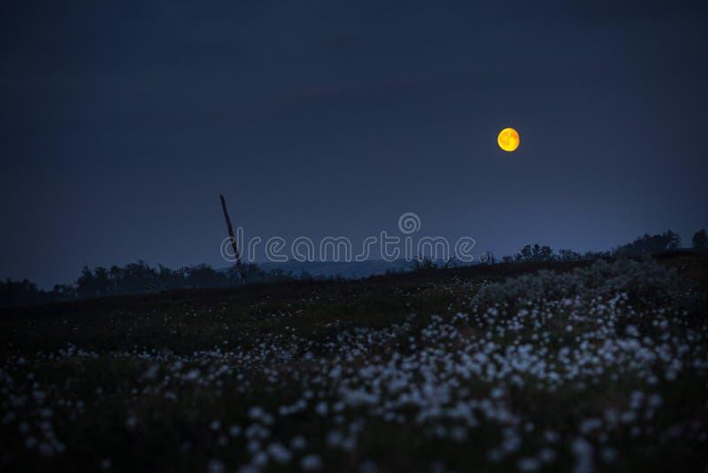 Noche de verano con la Luna Llena amarilla fotografía de archivo