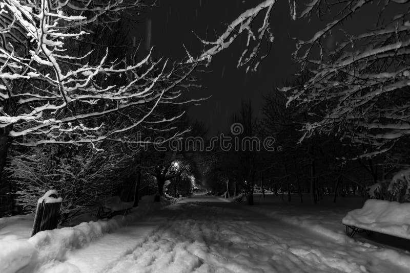 Noche del invierno en parque imágenes de archivo libres de regalías