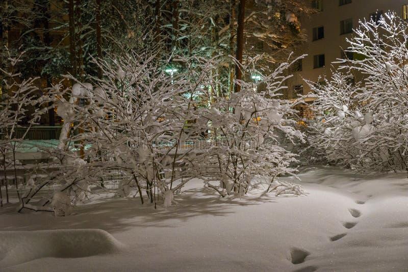 Noche del invierno, yarda silenciosa y árboles cubiertos en nieve, huellas en la nieve en el pueblo de Finlandia fotografía de archivo
