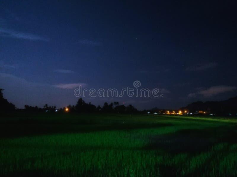 Noche en el arroz imagenes de archivo