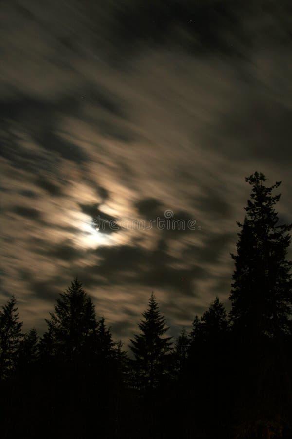 Noche en las maderas foto de archivo libre de regalías