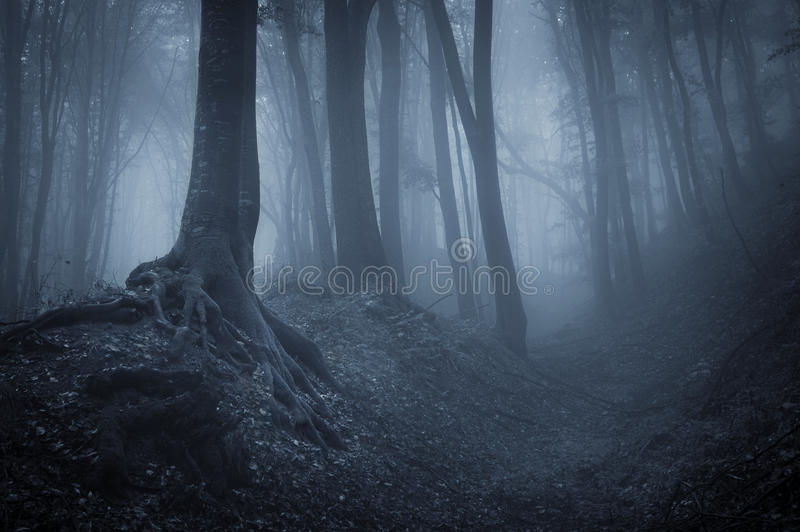 Noche en un bosque misterioso foto de archivo