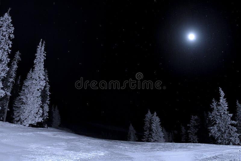 Noche iluminada por la luna fotos de archivo libres de regalías
