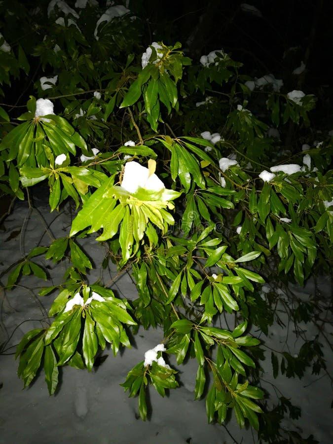 Noche Nevado Leavy imagen de archivo
