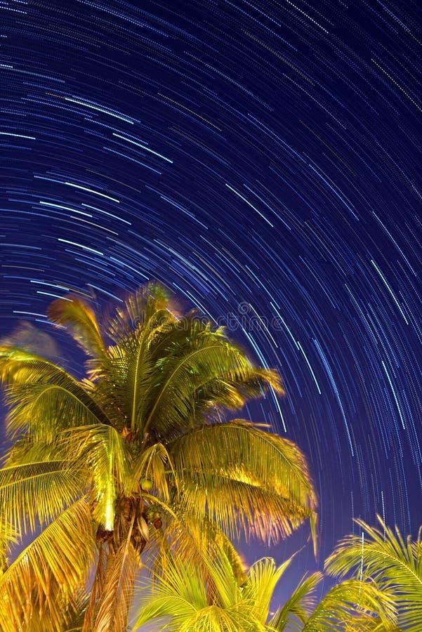 Noche tropical foto de archivo
