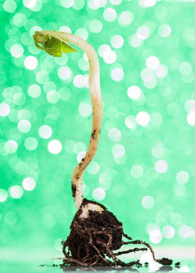 Noción del origen de la vida Brote joven en la tierra en un fondo verde con el bokeh foto de archivo