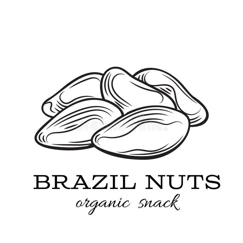 Noci del Brasile di vettore royalty illustrazione gratis