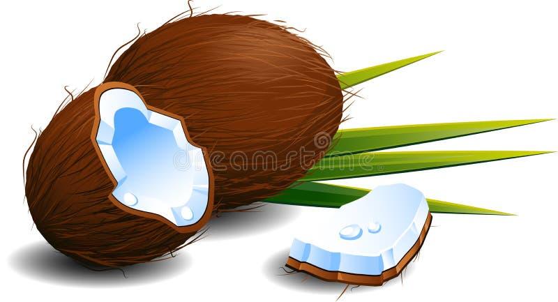 Noci di cocco illustrazione vettoriale