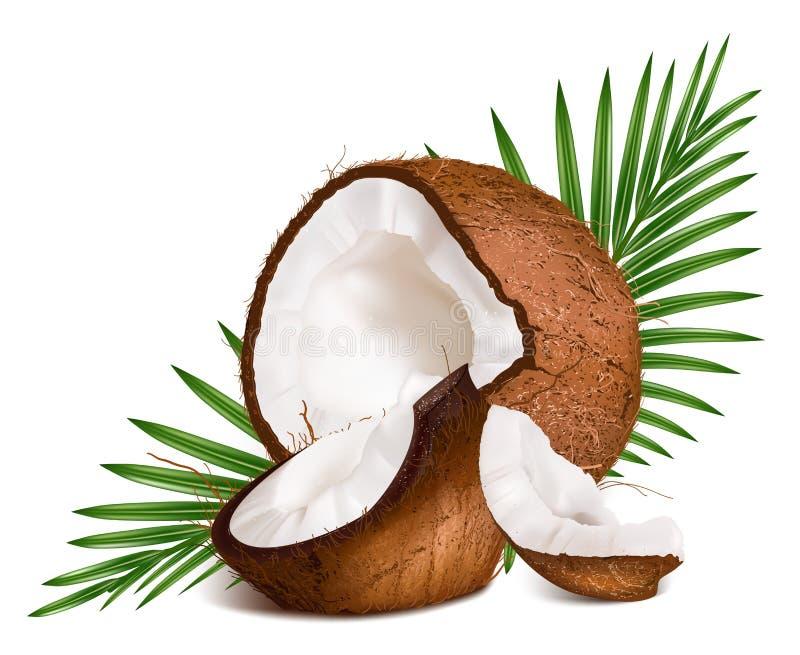 Noci di cocco con le foglie. illustrazione vettoriale