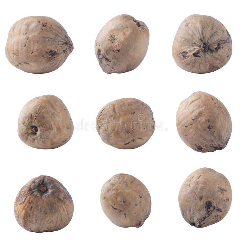 Noci di cocco isolate sul percorso di ritaglio bianco del fondo immagine stock